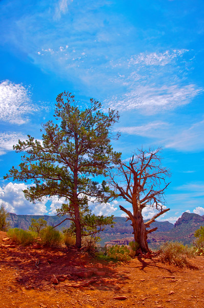 Two Lone Trees, Sedona, AZ.