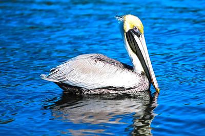 RonaldJAbbate_evergladesbirds-7