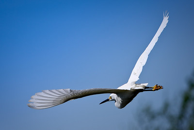 RonaldJAbbate_evergladesbirds-13