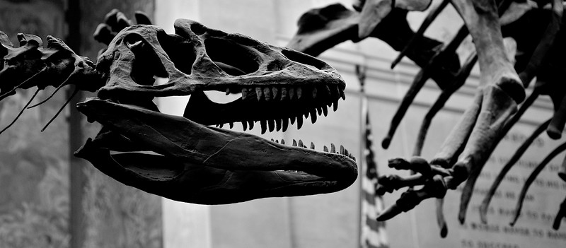 Dinosaurs at the Museum of Natural History, New York.