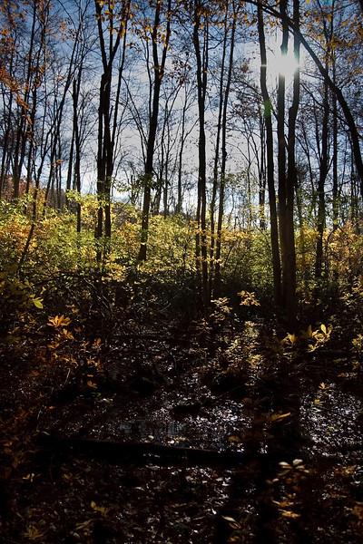 Autumn Wetlands 3