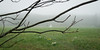 Stupa, Hay House Field, on a foggy day.<br /> Old Saybrook, CT