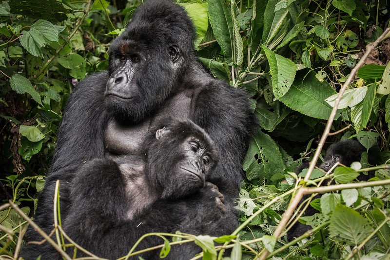 Humba family  | Virunga National Park