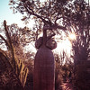 Feminine Baobab in the Sunset