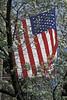 Flag in NY