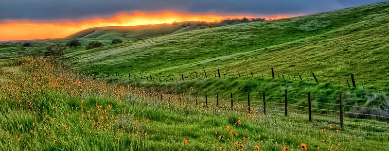 Green Meadow_5547