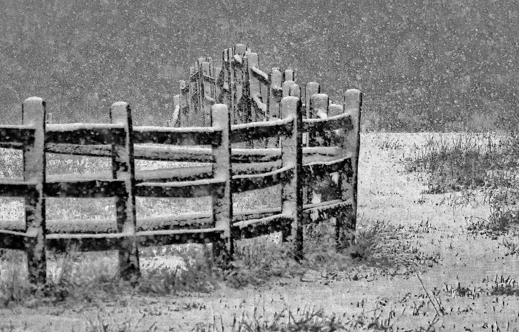 Blizzard on fence