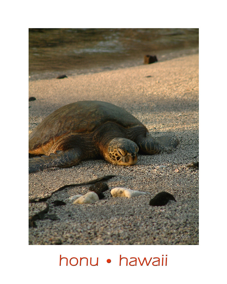 Hawaiian Green Sea Turtle Resting on the Beach at Pu'uhonua O Honaunau National Historical Park.<br /> ORDER #77219