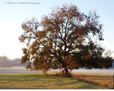 WM Pecan Tree 2