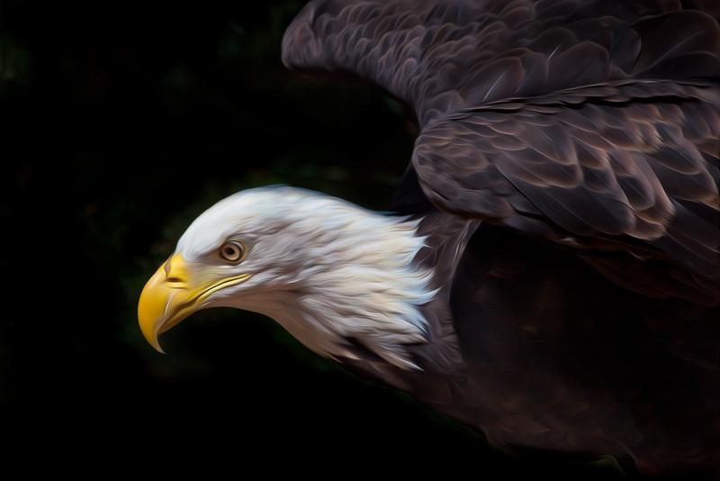 Baid Eagle