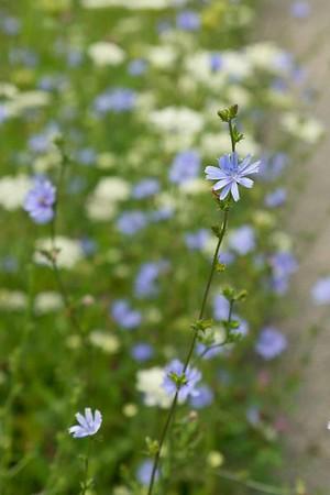 white&blue-8