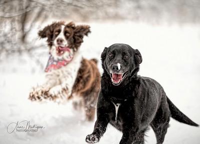 The joy of Winter