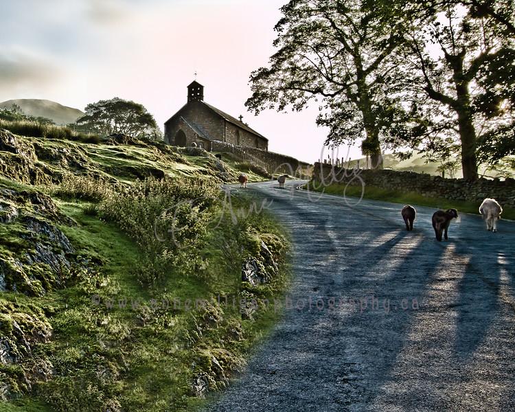 Sheep at Sunrise, Lake District, Britain