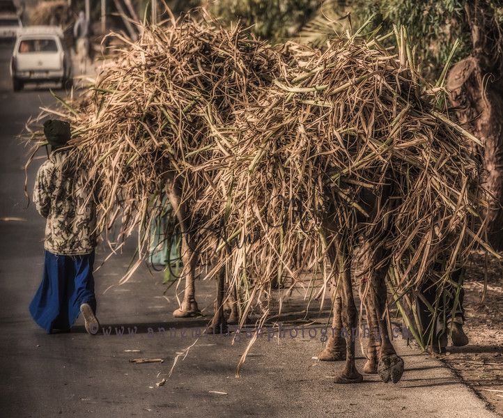 Boy with Camels - Luxor, Egypt