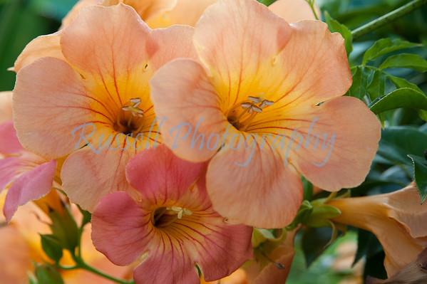 Wildflowers-8