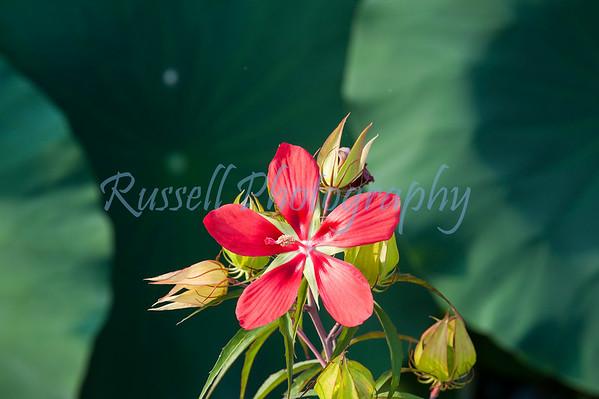 Wildflowers-9