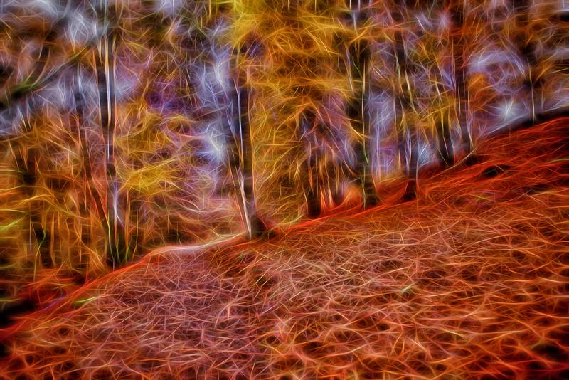 woodland glow