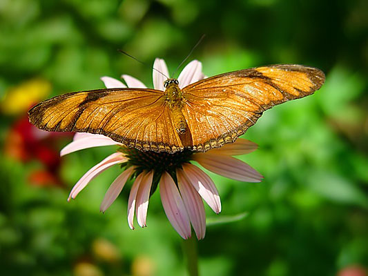 """Resting Butterfly <BR><BR>Want to buy a print of this image?  Click <a href=""""http://www.langfordphotography.com/For-Sale/Fine-Art/353198_rD3R59#!i=52036697&k=KBp2L"""">Here</a>!"""