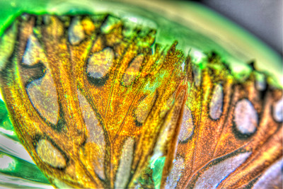 Orange Moth, Green Glass #2