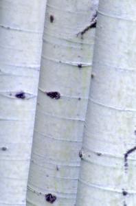 Three Aspens, Montana