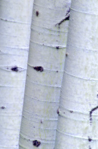 Three Aspens, Montana