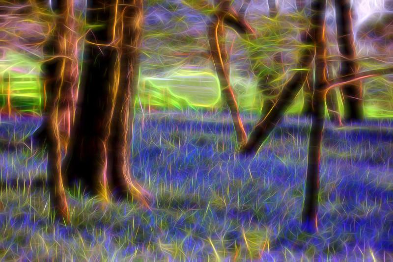 bluebells glow 2