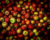 apples-art-mouse-flat--bg