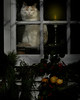 cat-night watchman-layer-