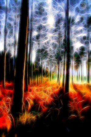 trees glow