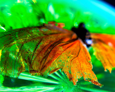 Orange Moth, Green Glass