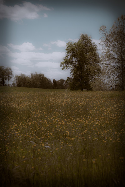 """A poppy field in Pennsylvania with an antique look<br />  <a href=""""http://www.eventHorizonFotografie.com"""">http://www.eventHorizonFotografie.com</a>"""