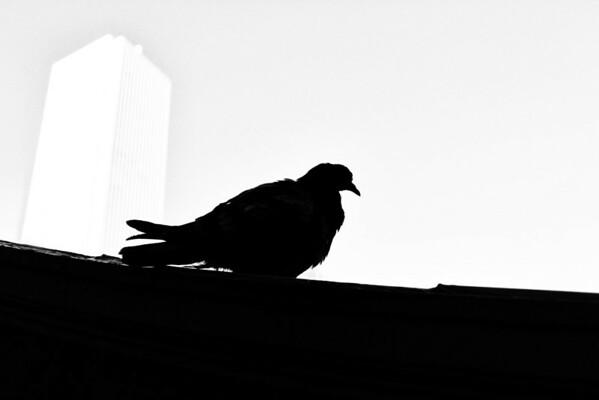 Urban Bird