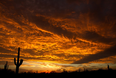 Golden Saguaro