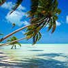 Palm Coast