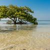 Lone Tree on Annes Beach