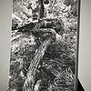 Title: The S-Tree<br /> Size: 16x24<br /> Medium: Giclée Canvas