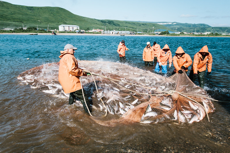 In-river commercial sockeye salmon fishery (Ozernaya River, Kamchatka, Russia)