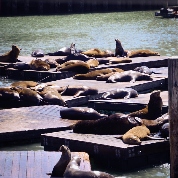 Sunbathing sea lions