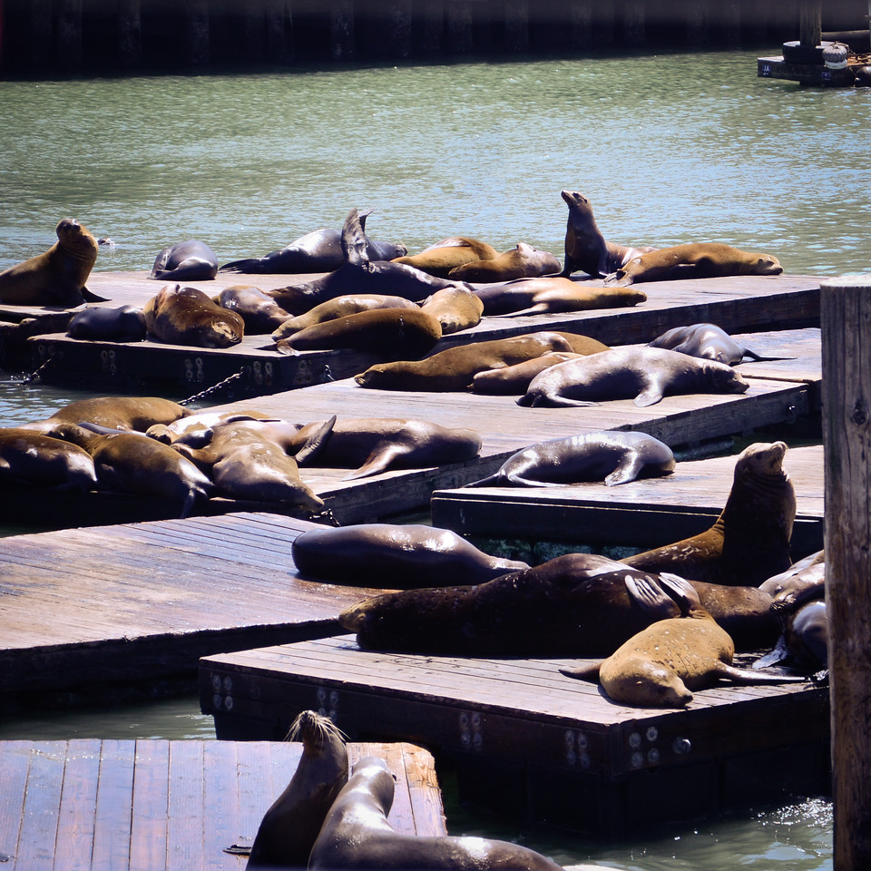 Sea lions lounge near Pier 39.