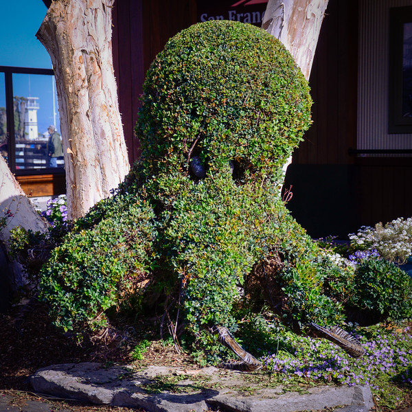 Topiary Octopus