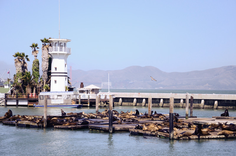 California sea lions lounge in front of Forbes Island