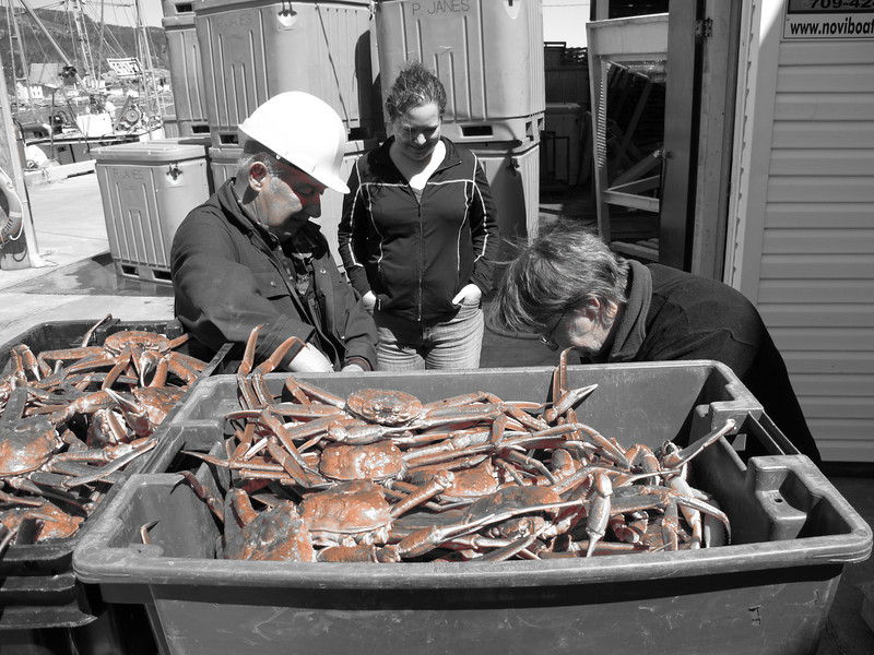 Crab in Salvage