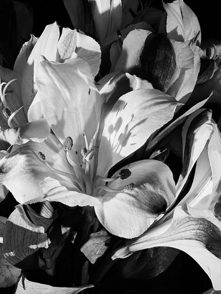 Flower #80