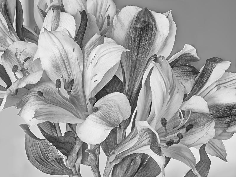 Flower #84