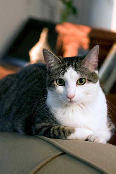 Tabby Cat (Leia), Virginia