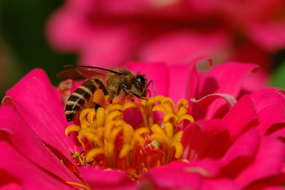 Macro image of a flower with a bee collecting nectar.