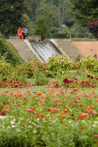 Couples meet and sit amongst the flower beds at the Mughal Gardens, Shalimar Bagh, Nishat Bagh in Kashmir, J&K, India.  Terraced lawns, cascading fountains, bright flowerbeds with panoramic view of Dal Lake is what makes the three Mughal Gardens of Chesmashahi, Nishat and Shalimar the paradise of Mughal Emperors.