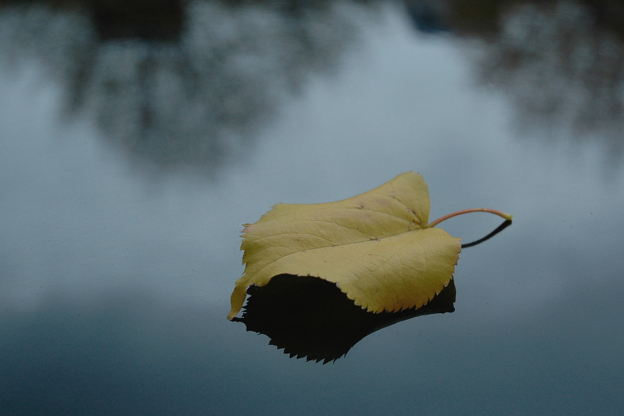 Loneliness<br /> Lonely leaf as shot in North America.