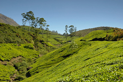 Scenic view of the tea estates in Munnar with its winding roads. Munnar is a town located in Idukki District of  Kerala (located in the southern Western Ghats). The area is surrounded by vast jungles and is 1600 m (5400 ft) above sea level. There are three rivers - Madupetti, Nallathanni and Periavaru which flow through this town.