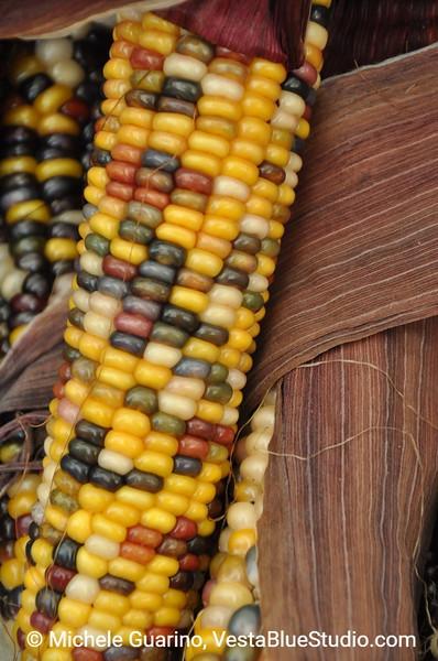 Indian Corn Portland Oregon Farmers Market